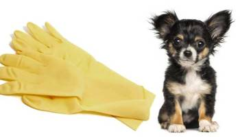 3 Ways To Keep Your Car Clean From Pet Hair Oakland S Blog