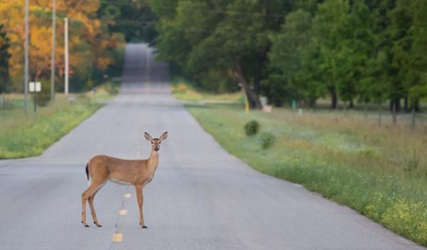 deer-2017-11