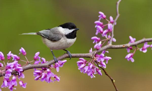 bird-car-b